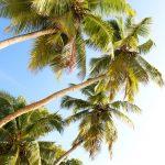 Matkapostaus Seychellien paratiisista