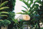 Vinkkini ja kokemukseni Ranskan Polynesian Moorean unelmalomasta