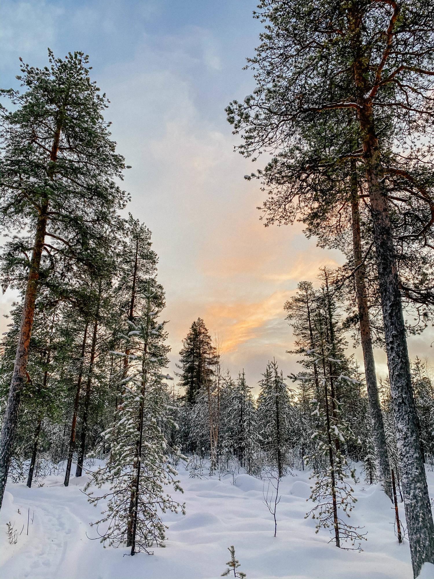 Talvisen Ivalon matkan huippuhetkiä ja reissuvinkkejä